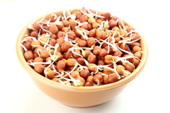 Germinated chick peas. Cicer arietinum bengal gram,chana dal in a bowl royalty free stock photography