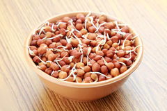 Germinated chick peas. & x28; Cicer arietinum & x29;bengal gram,chana dal on a wooden background Stock Photo