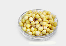 Germinated chickpeas Stock Images