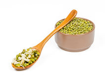 Germinated mung. In spoon and dry grain on white background Royalty Free Stock Images