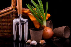 Germinated onion, garlic, basket, rakes and peat pot with soil f Royalty Free Stock Image