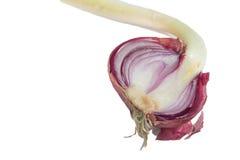 Germinated onion Stock Photos