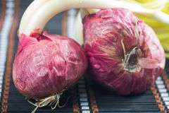 Germinated onion Royalty Free Stock Images