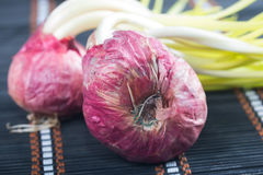 Germinated onion Royalty Free Stock Image