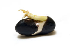 Germinated Seed Stock Photo