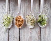 Germinated seeds Stock Photo