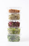 Germinated seeds Stock Images