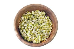 Germinated sprouts of mung beans Royalty Free Stock Image