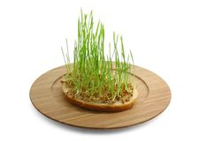 Germinated wheat. And bread on wood plate Stock Photos