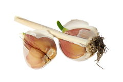 Germinating garlic on the white background. Royalty Free Stock Image