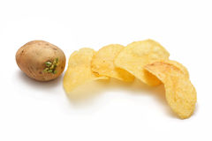 Germinating Potato And Chips. A germinating potato with some potato chips isolated on white background Royalty Free Stock Photography