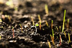Germinating seed in agriculture. Plant seed agriculture statistics fertilizer sunlight Stock Photography