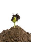 Germination de graine de haricot en terre Photographie stock