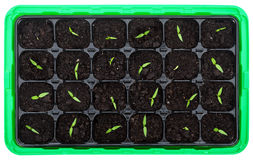 Germination tray with small seedlings Royalty Free Stock Image