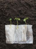 Germinazione dei semi organica senza suolo fotografia stock