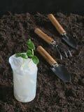 Germinazione dei semi organica senza suolo fotografia stock libera da diritti