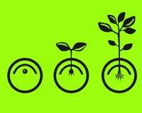 Germine las semillas Fotografía de archivo libre de regalías
