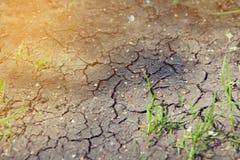 Germogli aumentanti su terra asciutta Concetto di ecologia fotografie stock libere da diritti