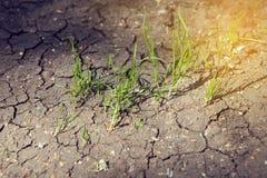 Germogli aumentanti su terra asciutta Concetto di ecologia immagini stock libere da diritti