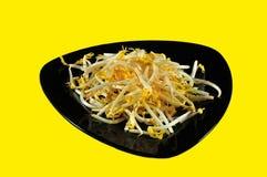 germogli Bio--organici del fagiolo verde Fotografia Stock Libera da Diritti