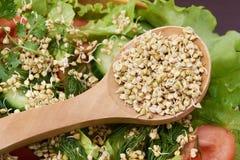 germogli buckwheat salute vegetarianism spuntino Insalata Immagine Stock