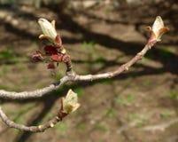 Germogli cari di maggio fotografie stock