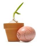 Germogli colorati dell'uovo di Pasqua e dell'aglio Immagine Stock Libera da Diritti