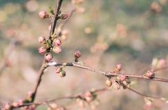 Germogli dei fiori su un ramo immagini stock libere da diritti