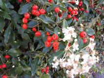 Germogli dei fiori sulle vie di Storkow fotografia stock libera da diritti