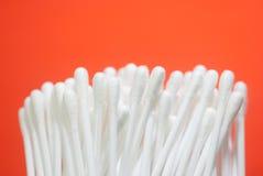 Germogli del cotone Fotografia Stock