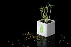 Germogli del fagiolo verde fotografie stock libere da diritti