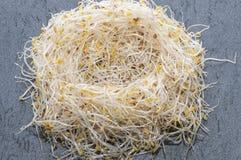 Germogli del nido Immagine Stock