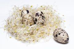 Germogli del nido Fotografie Stock Libere da Diritti
