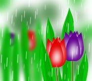 Germogli del tulipano Immagini Stock Libere da Diritti