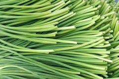 Germogli dell'aglio Immagini Stock