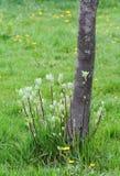 Germogli dell'albero immagine stock