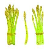Germogli dell'asparago legati in un mazzo Fotografia Stock