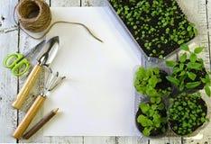 Germogli della petunia, del pepe, della fragola e della pansé con gli strumenti di giardino e lo spazio sulla tavola d'annata, vi Fotografie Stock Libere da Diritti