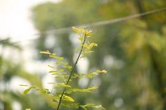 Germogli della pianta selvatica nel giardino immagini stock libere da diritti