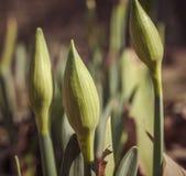 Germogli della primavera Fotografia Stock Libera da Diritti