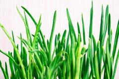 Germogli delle cipolle verdi su un fondo bianco Fotografie Stock