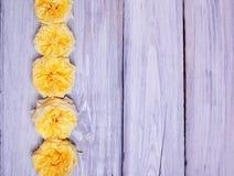 Germogli delle rose gialle Fotografie Stock Libere da Diritti