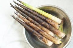 Germogli di bambù Immagine Stock
