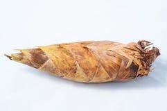 Germogli di bambù Fotografia Stock