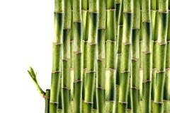 Germogli di bambù Immagini Stock