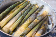 Germogli di bambù d'ebollizione Fotografia Stock Libera da Diritti