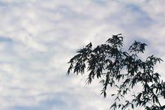 Germogli di bambù nel cielo Fotografia Stock
