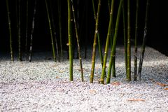 Germogli di bambù in Zen Garden fotografie stock