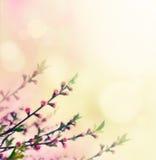 Germogli di fiore Fotografia Stock