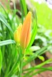 Germogli di fiore Fotografie Stock